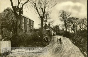 Lamb Lane, Roos 1927
