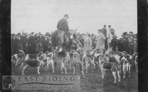 Holderness Hounds, Westwood, Beverley 1900s