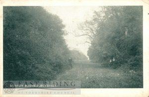 Westwood, Burton Bushes, Beverley 1906