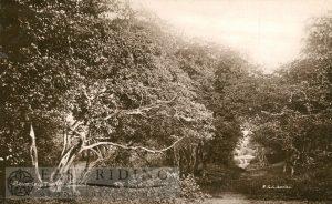 Westwood, Burton Bushes, Beverley 1920s
